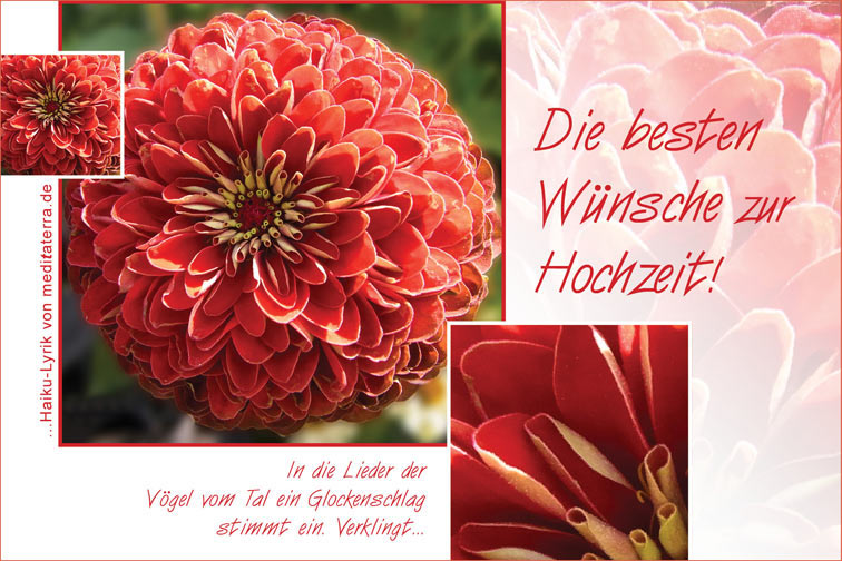 Hochzeitskarte zum Ausdrucken oder per Mail - mit roter Asterblüte und Haiku-Gedicht