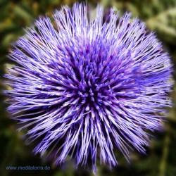 Mandala-Blüte: Indigo (Kräuterblüte) - Entspannung mit Blütenfarben - Blütenmeditation - Farbmeditation