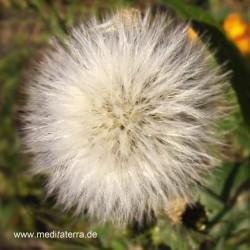 Silberne Blüte - Mandala-Form