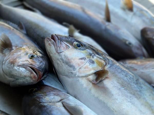 Fische im Hafen
