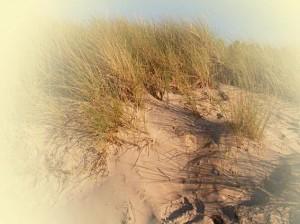 Düne mit feinem Sand und Dünengras in der Abendsonne - Nahaufnahme