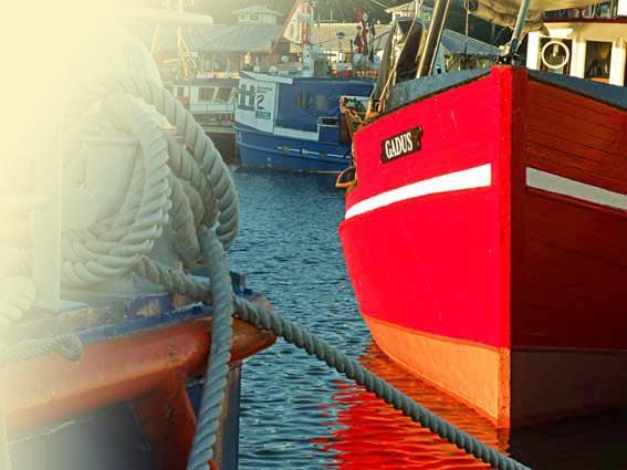 Sassnitz Fischerboote Taue Hafen
