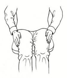 Reiki-Übung / Entspannung im Büro: Hände auf die Oberschenkel - Handauflegen