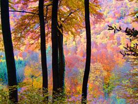 Herbst im Siebengebirge am Rhein