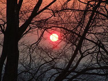 Sonnenuntergang hinter Baumzweigen zum Meditieren