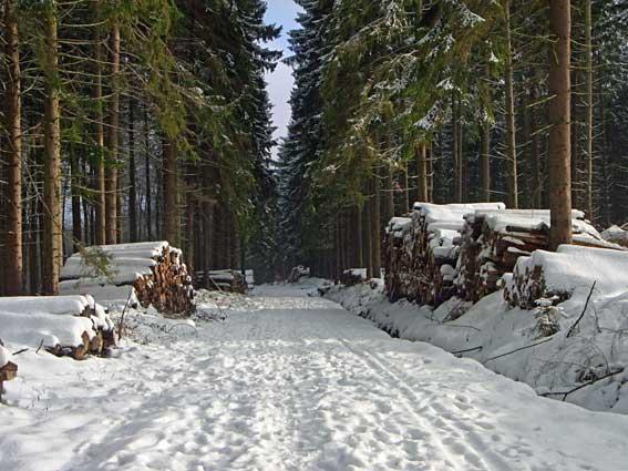 Winterwald im Schnee Weihnachtszeit Fichten Weg mit Holz