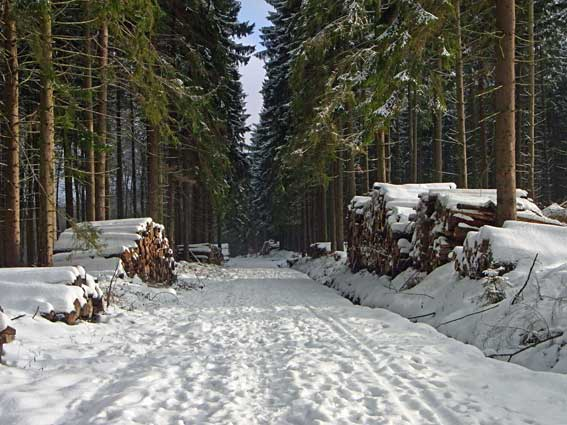 Waldweg verschneit