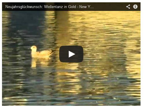 Ente schwimmt auf goldenem See