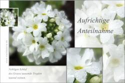Trauerkarte - Beileidskarte: Aufrichtige Anteilnahme mit weißer Blüte, Tropfen und Haiku-Gedicht.