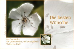 Allgemeiner und flexibler Glückwunsch für verschiedene Anlässe, beste Wünsche mit weißer Quittenblüte und Haiku-Gedicht / Lyrik von meditaterra