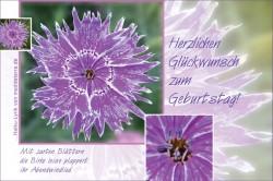 Geburtstagsgruss - Glückwunschkarte zum Geburtstag mit einer violetten Nelke und einem Haiku-Gedicht, Lyrik von meditaterra