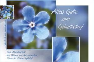 Geburtstagskarte - Glückwunsch zum Geburtstag mit Vergissmeinich-Blüte und Haiku-Gedicht, Lyrik, Alles Gute zum Geburtstag!