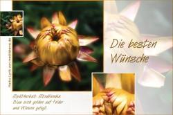 Grusskarte zur goldenen Hochzeit mit goldener Strohblume, die besten Wünsche - mit Haiku-Gedich, Lyrik