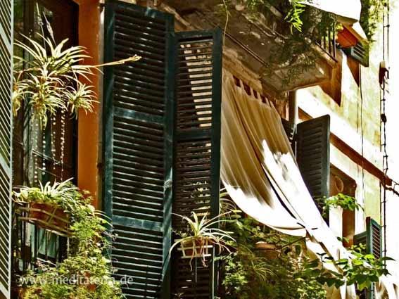 Altstadt in Palma de Mallorca: gründe Fensterläden mit Gardinen und Balkonpflanzen
