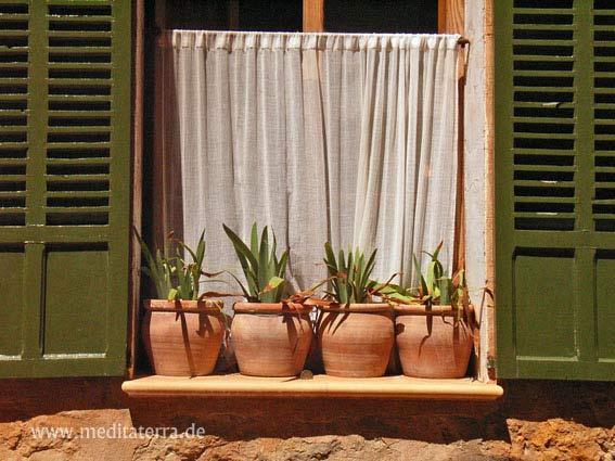 Mallorca: Dorfhaus-Fenster mit Blumentöpfen und grünen Fensterläden