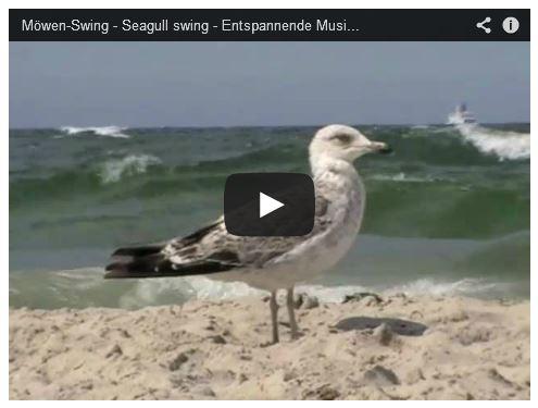 Moeve am Sansstrand mit Wellen