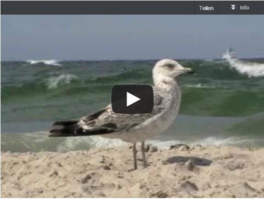 Möwen-Video Thumbnail mit Sandstrand Möwe und Meereswellen, blauer Himmel - auch für Entspannung und Glückwunsch