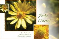 Glückwunschkarte zu Ostern mit gelber Blüte und Haiku-Gedicht / Lyrik per E-Mail oder zum Ausdrucken!