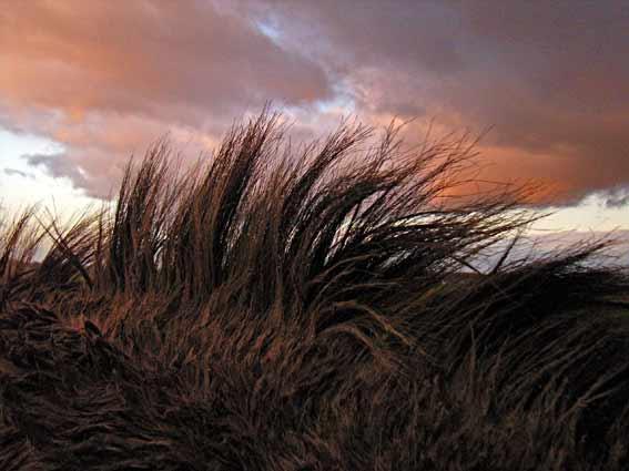 Pferdefell mit struppigen Haaren aus der Nähe betrachtet mit Abendrotwolken im Hintergrund.