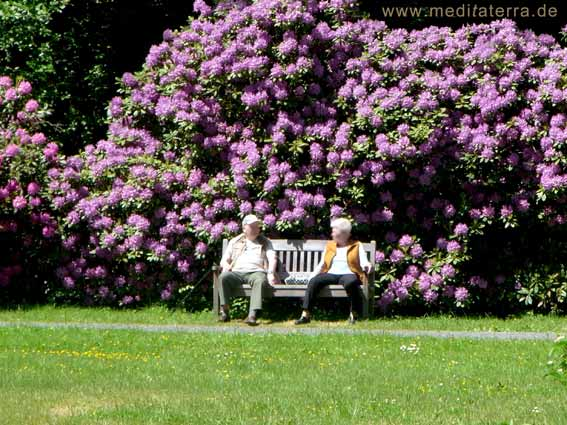 Bad Bertrich - im landschaftstherapeutischen Garten - Mann und Frau auf einer Bank mit blühenden Rhododendren (violett)