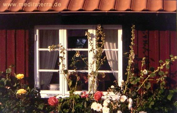 Blumengeschmücktes Fenster an einem falunroten Haus in Schweden