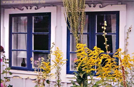 Fenster mit Goldrute an einem Holzhaus in Arild