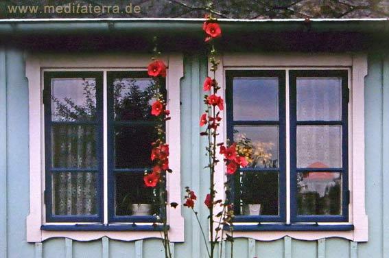 Fenster an einem türkisen Holzhaus in Schweden mit roten Malven
