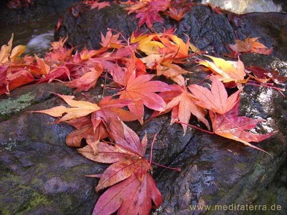 rote Ahornblätter am Felsenbach