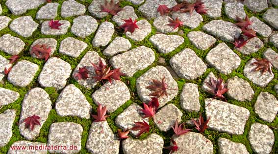 Rote Ahornblätter auf Pflastersteinen im japanischen Garten