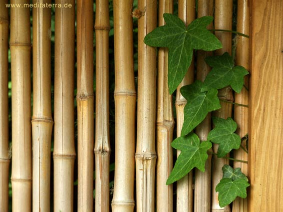 Garten Bambuszaun