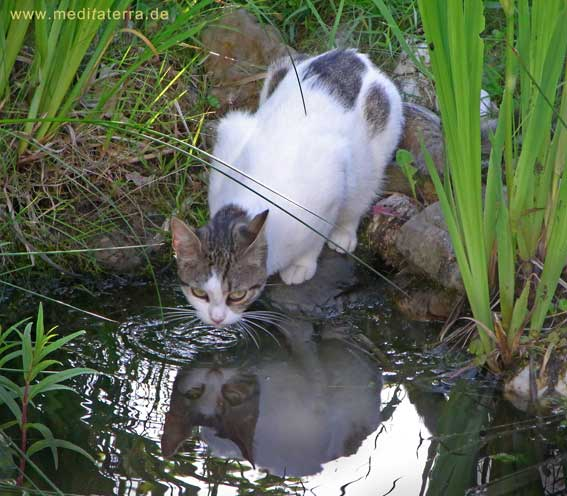 Katze am Wasserteich