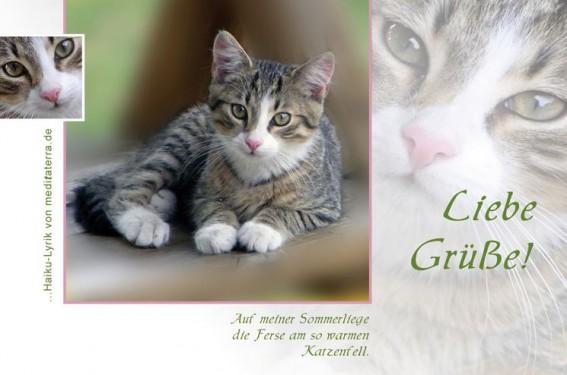 Liebe Gruesse mit junger grau getigerter Katze