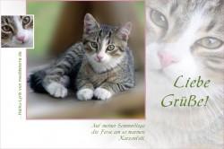 Katzenbaby, graue Tigerkatze, Liebe Grüße, Grußkarte