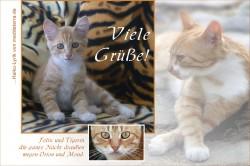 Katzen-Glückwunschkarte mit Katzenbaby auf Tigersofa und zwei weiteren Katzen