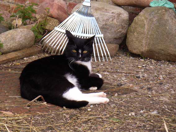 Lach-Yoga-Übung: schwarze Katze mit silbernem Laubrechen auf Grubendeckel