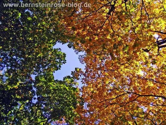 Entspannung: Blick in die Baumkronen zweier verschieden gefärbter Bäume im Herbt - grün und gelb.