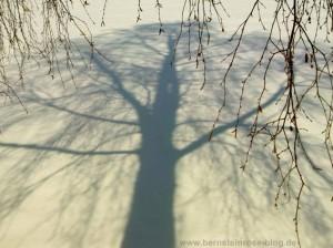 Schatten eines Birkenbaums im Schnee mit Birkenzweigen am Rand.