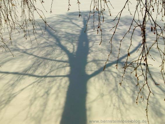 Achtsamkeit genießen: Schatten eines Birkenbaums im Schnee mit Birkenzweigen am Rand.