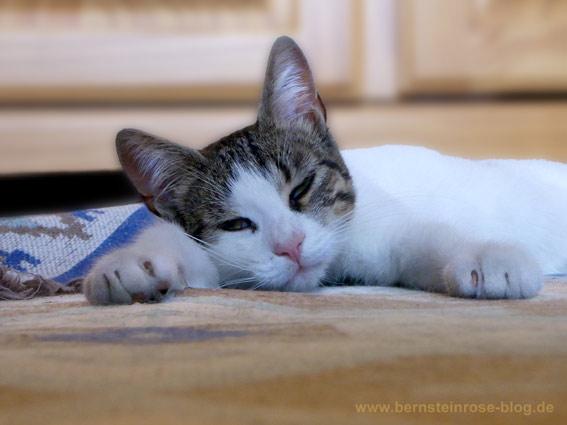 Lach-Yoga mit Katze: Weiße Katze, am Köpfchen grau getigert, liegt auf einem Teppich.