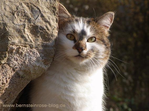 Katze als Bergsteiger