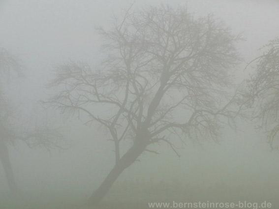 Kahler Obstbaum im winterlichen Nebel. Baum steht schief.