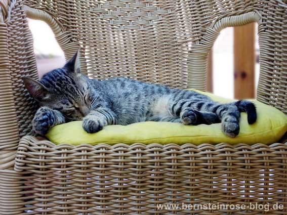 Niedliches graues Tigerkätzchen liegt auf einem Korbsessel und schläft. Achtsamkeitsübungen und Lach-Yoga mit dem Foto.