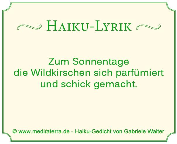 Haiku-Gedicht über Wildkirschenblüten - Lyrik im Bernsteinrose-Blog