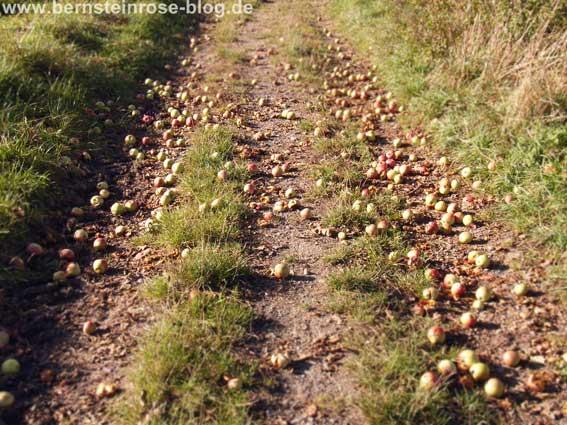 Herabgefallene Äpfel auf einem Feldweg - Fallobst