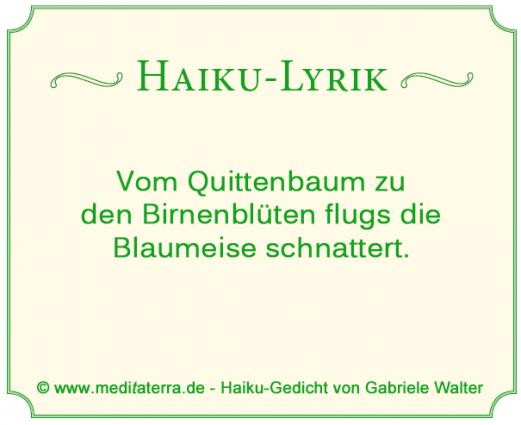 Haiku Blaumeise Birnenbaum Quittenbaum