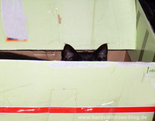 Katzenversteck in Kiste