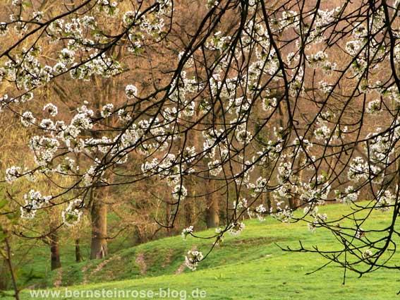 Grüne Wiese mit Blütenzweigen im zeitigen Frühjahr. Landschaftsfoto