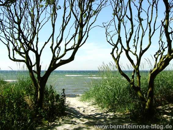 Strandzugang in den Dünen mit zwei Bäumen im Winter - mit blauem Meer und Dünenweg - blauer Himmel