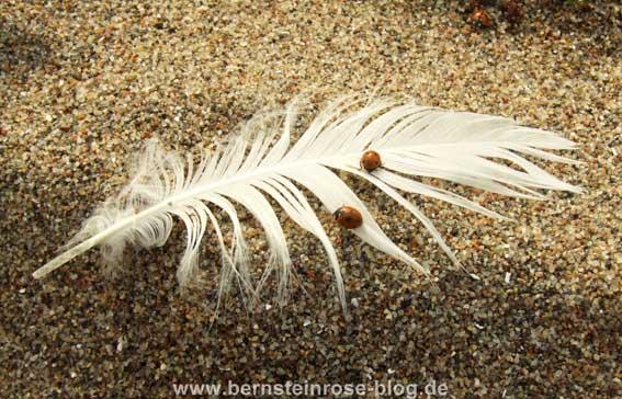 Weiße Möwenfeder mit zwei Marienkäfern im Sand