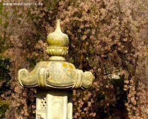 Japanischer Garten Kaiserslautern - Frühjahrsblüte